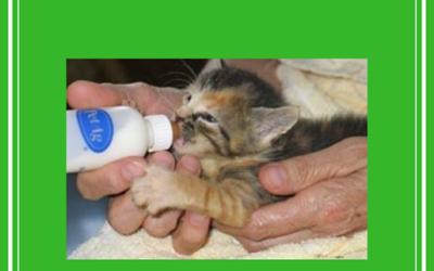 Dierenbeschermingscentrum: Gastgezin Kat